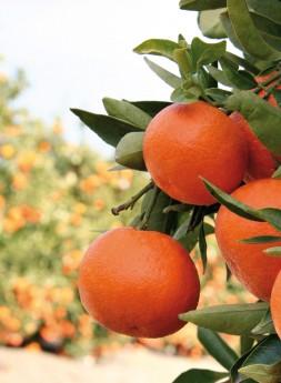Producción Naranjas Jiménez