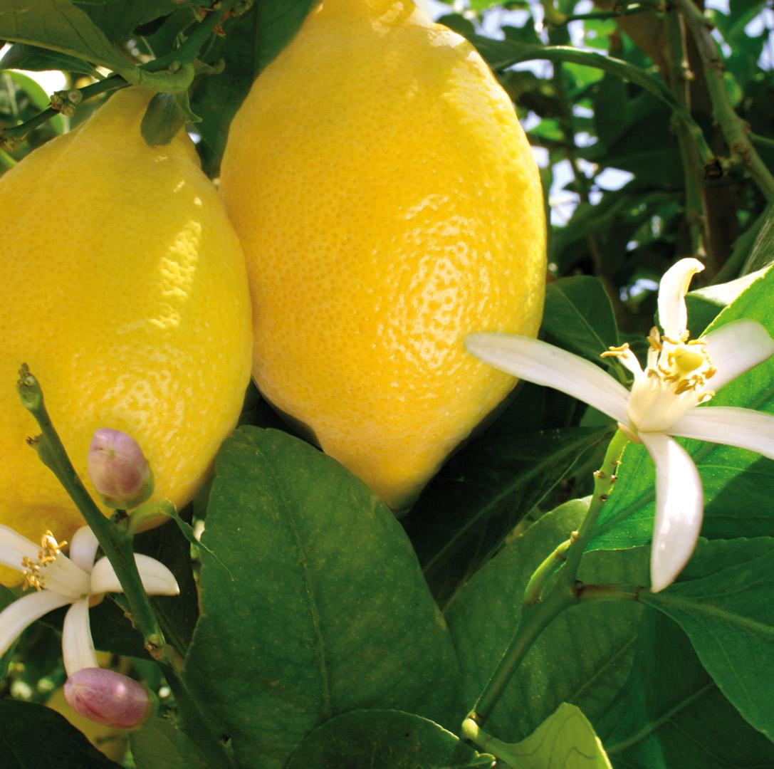 Foto-Limones-y-Naranjas-Jiménez.