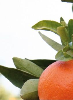 Finca Naranjas Jiménez