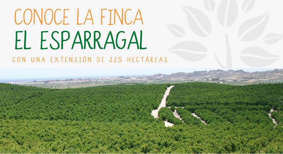 Los Orígenes de la finca El Esparragal y Naranjas Jimenez