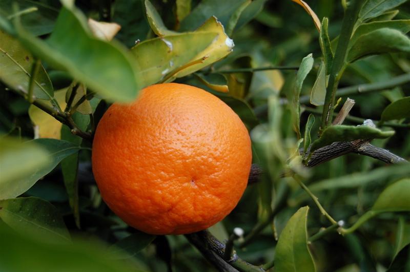 Los-beneficios-de-las-mandarinas