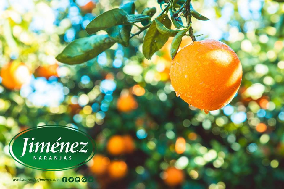 naranjas-jimenez-mandarina-clemenrubi