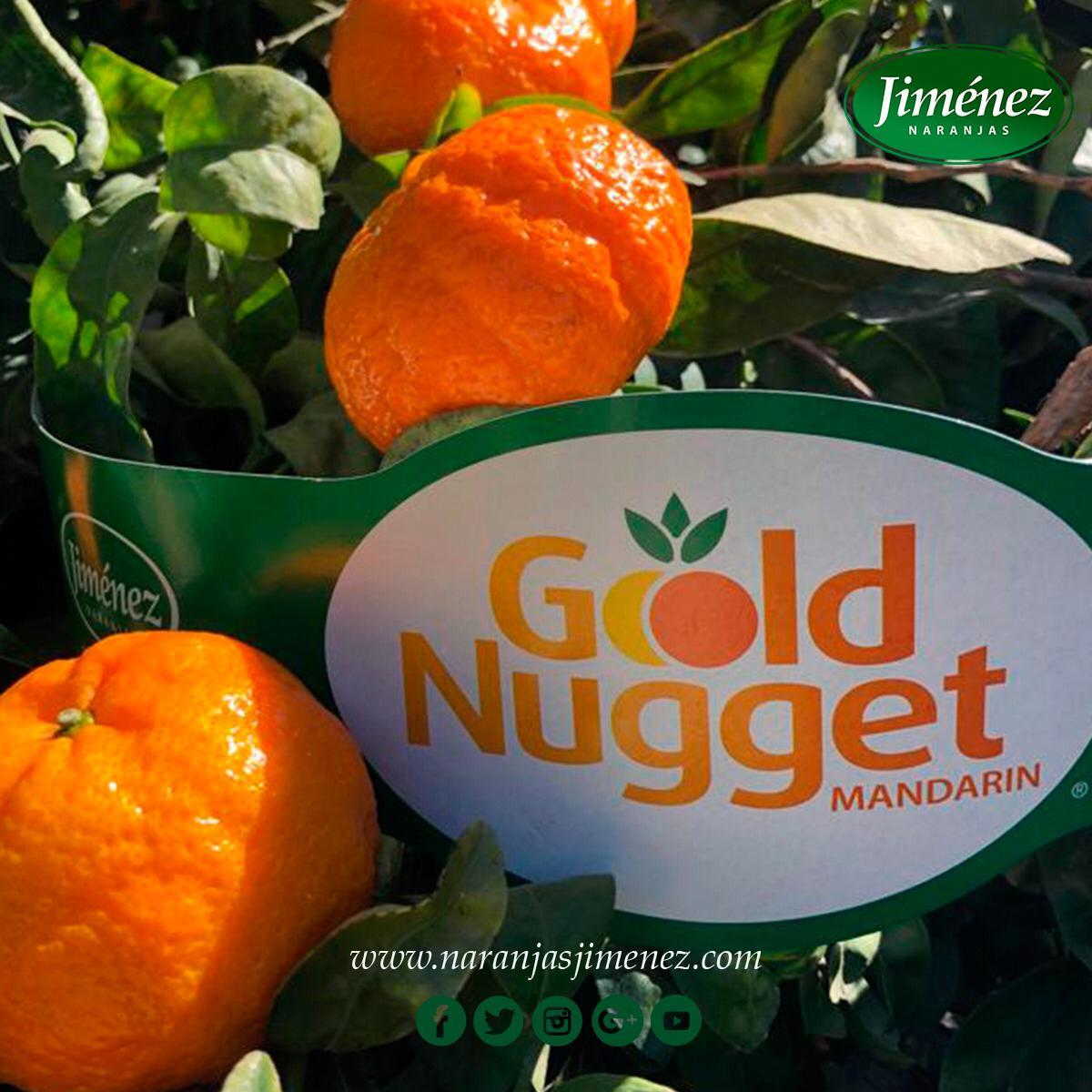 Naranjas Jimenez - Mandarina Gold Nugget